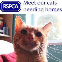 cats_needing_homes
