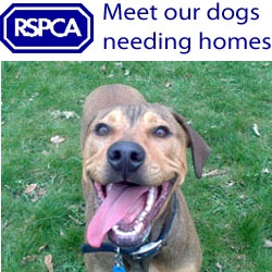 dogs_needing_homes